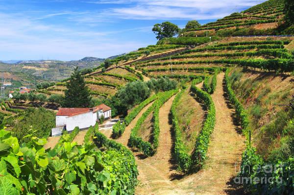 Douro Wall Art - Photograph - Vineyard Landscape by Carlos Caetano
