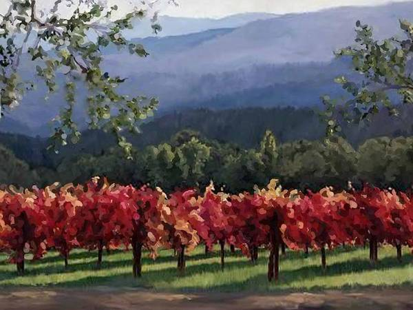 Photograph - Vineyard With A View by Rob Hemphill