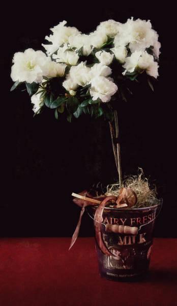 Photograph - Vintage Azaleas by Ari Salmela