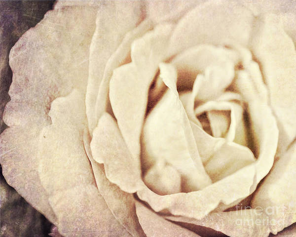 Photograph - Vintage Rose by Traci Cottingham