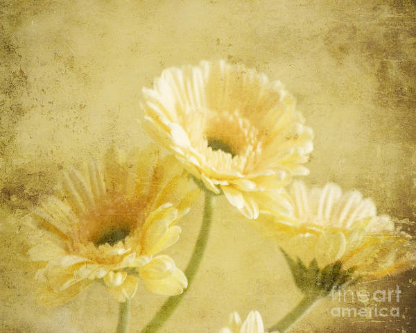 Photograph - Vintage Vanilla by Traci Cottingham