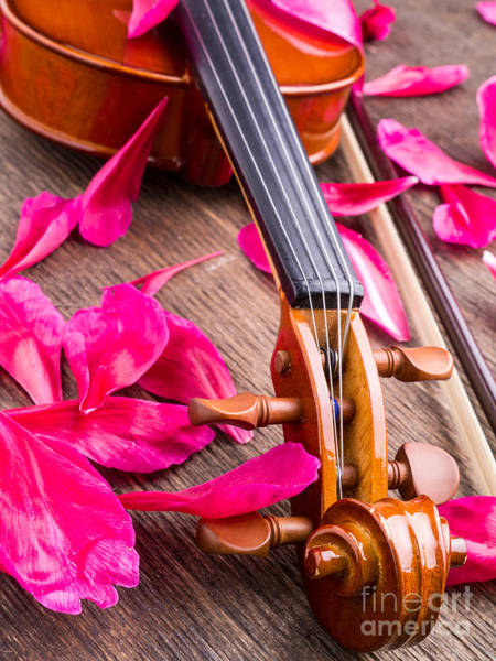 Photograph - Violin And Roses by Edward Fielding