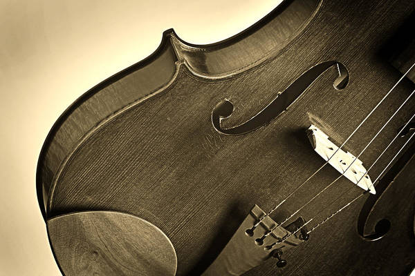 Photograph - Violin Isolated by M K Miller