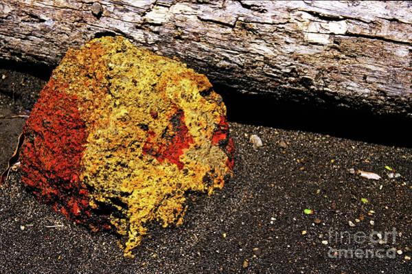 Wall Art - Photograph - Volcanic Rock by Sami Sarkis