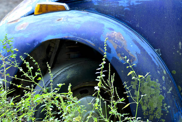 Photograph - Volkswagen Graveyard - 1 by Carolyn Marshall
