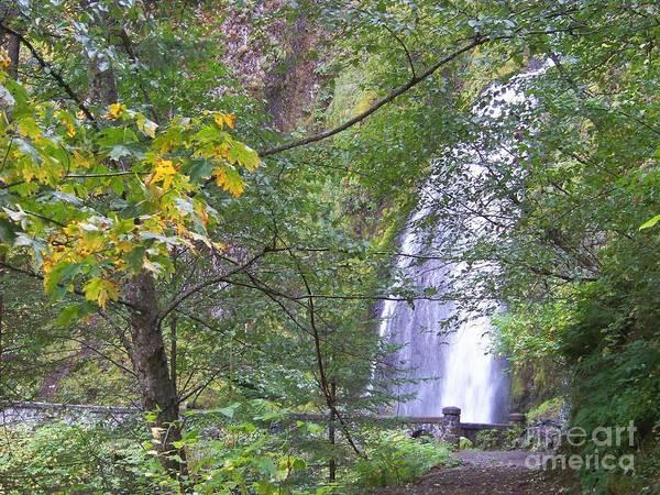 Photograph - Wahkeena Falls by Charles Robinson