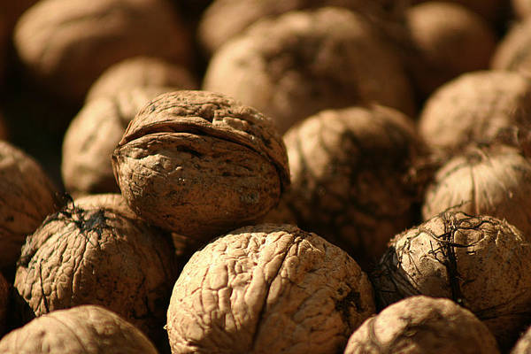 Photograph - Walnut by Emanuel Tanjala