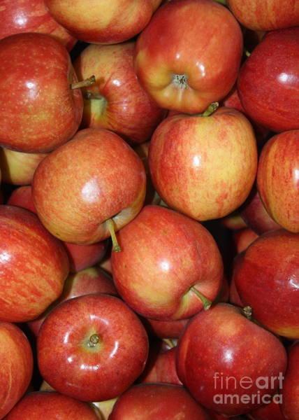 Photograph - Washington Apples by Carol Groenen