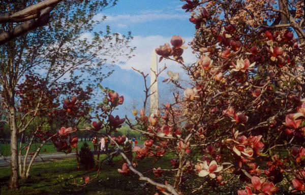 Photograph - Washington In Spring by Mark Dodd