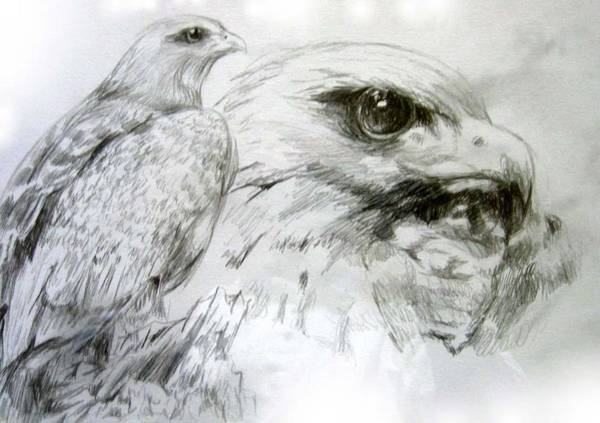 Avian Drawing - Watching by Alice Chen