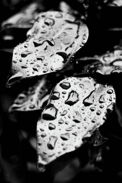 Wall Art - Photograph - Water Drops by Matthew Trudeau