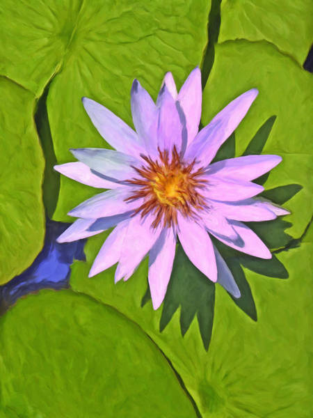 Painting - Water Lily by Dominic Piperata