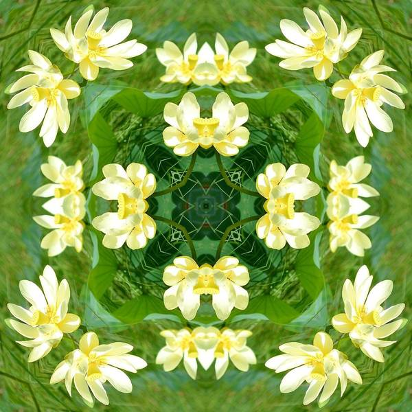 Katrina Digital Art - Water Lily by Katrina Johns