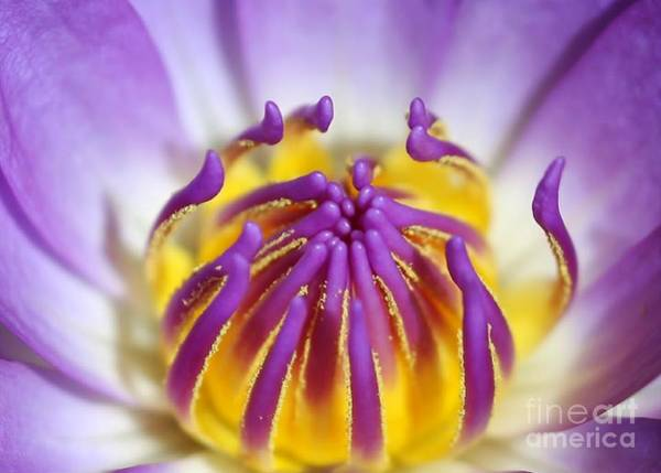 Photograph - Water Lily Sticky Fingers by Sabrina L Ryan