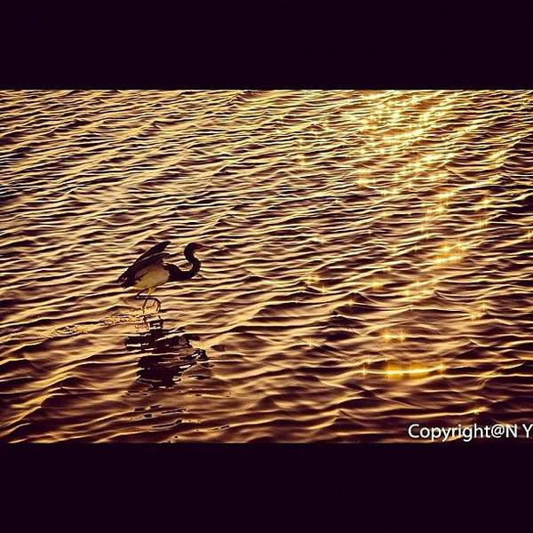 Egret Photograph - #water #reflection #twilight by Naveen Yellappa