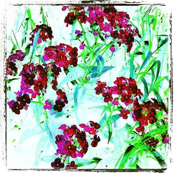 Abstract Flowers Wall Art - Photograph - Watercolor Garden #android # by Marianne Dow