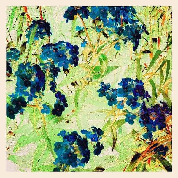 Abstract Flowers Wall Art - Photograph - Watercolor Violets #android by Marianne Dow