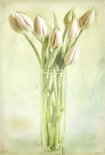 Wall Art - Digital Art - Watercolour Tulips  by Margaret Hormann Bfa