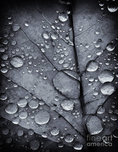 Photograph - Waterdrops II by David Waldrop