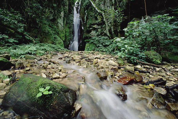 Gombe National Park Wall Art - Photograph - Waterfall On Gombe Stream In Low by Gerry Ellis