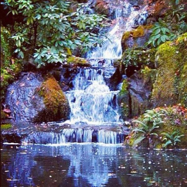 Japanese Koi Photograph - Waterfall - Portland Japanese Garden Portland Or by Anna Porter