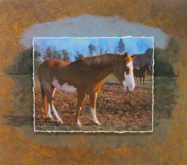 Mixed Media - Wautoma Horse by Anita Burgermeister