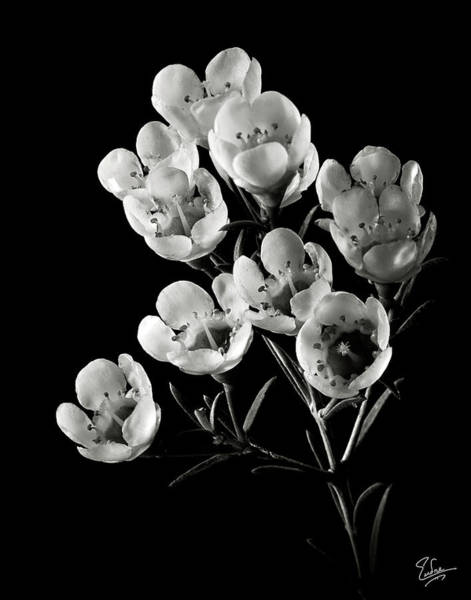 Wall Art - Photograph - Wax Flowers In Black And White by Endre Balogh