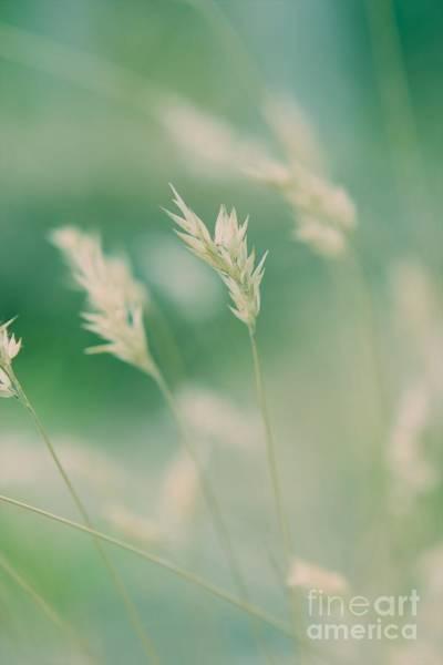 Wayside Photograph - Wayside Grass - Colour by Hideaki Sakurai