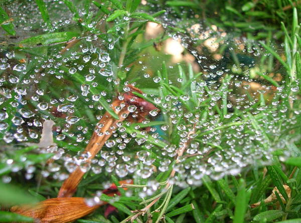 Photograph - Web Of Rain by Margaret Pitcher