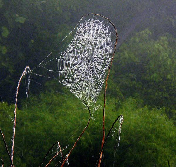 Photograph - Web Over Foggy Lake by Ericamaxine Price