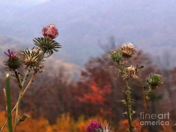 Wall Art - Photograph - Weeds Are Great Shenandoah Nation Park by Steven Lebron Langston