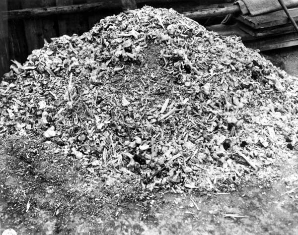 Concentration Camp Photograph - Weimar, Germany--this Heap Of Ashes by Everett