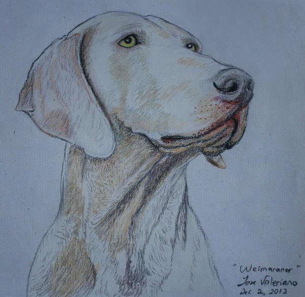 Pastel - Weimaraner Dog by M Valeriano