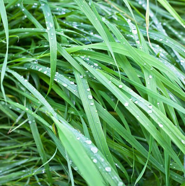 Humid Photograph - Wet Grass by Tom Gowanlock