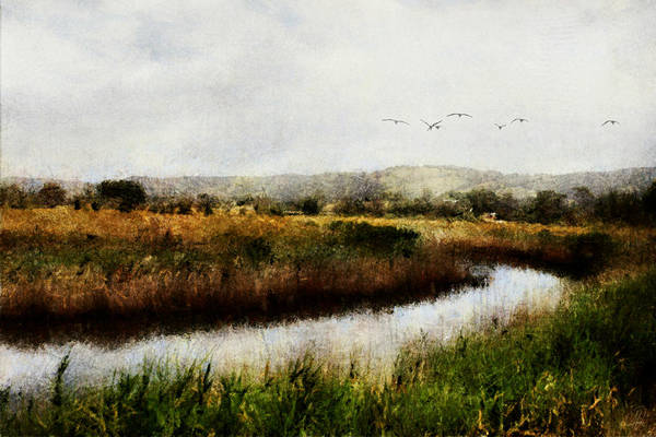 Marsh Bird Digital Art - Wetlands Landscape by Margaret Hormann Bfa