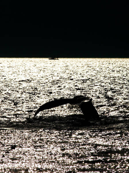 Wall Art - Photograph - Whale In Sunset by Paul Ge