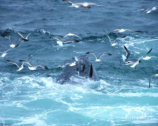 Photograph - Whale by Lizi Beard-Ward