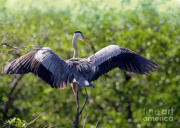 Photograph - What A Wingspan by Sabrina L Ryan