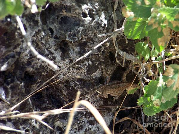 Photograph - What Lizard by Charles Robinson