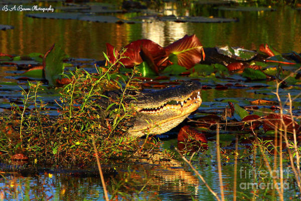 Photograph - What Lurks On The Swamp by Barbara Bowen