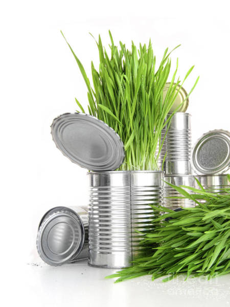 Wall Art - Photograph - Wheatgrass In Aluminium Cans On White by Sandra Cunningham