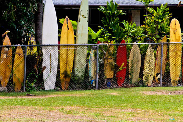 Surfboard Fence Photograph - When Surfboards Go Bad by Mitch Shindelbower