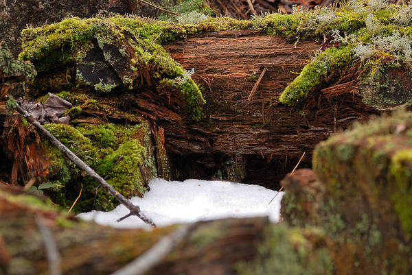 Lichens Photograph - Where Elves And Faeries Dwell by Susan Capuano