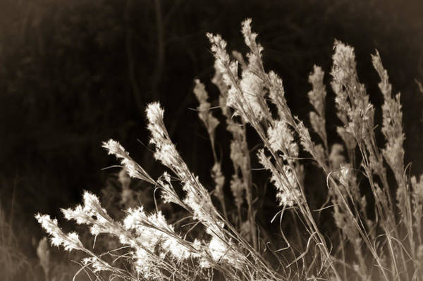 Photograph - Whisper Gently by Carolyn Marshall
