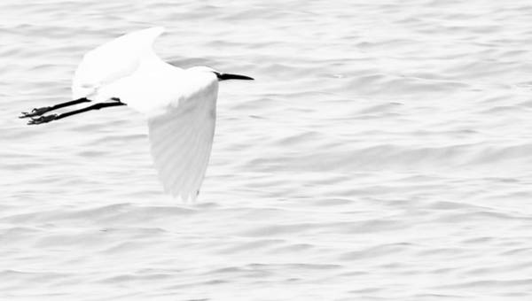 Photograph - Whispering White by Elizabeth Hart