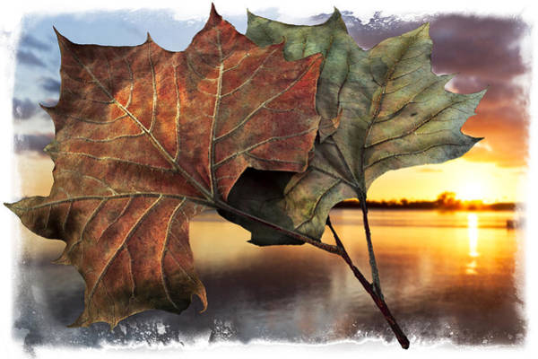 Ocoee Wall Art - Photograph - Whispers In The Wind by Debra and Dave Vanderlaan