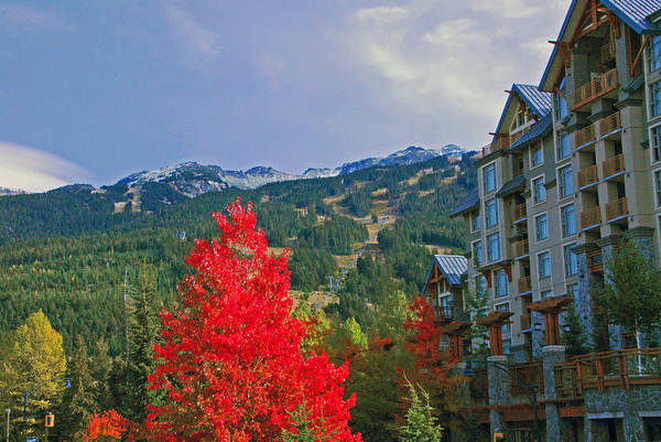 Photograph - Whistler Red by Lynn Bauer