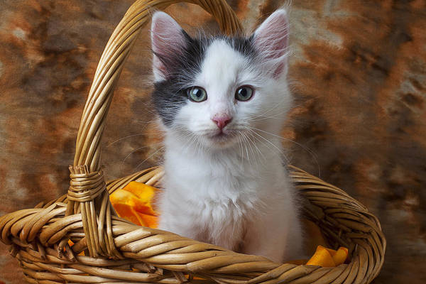 Wall Art - Photograph - White And Gray Kitty by Garry Gay