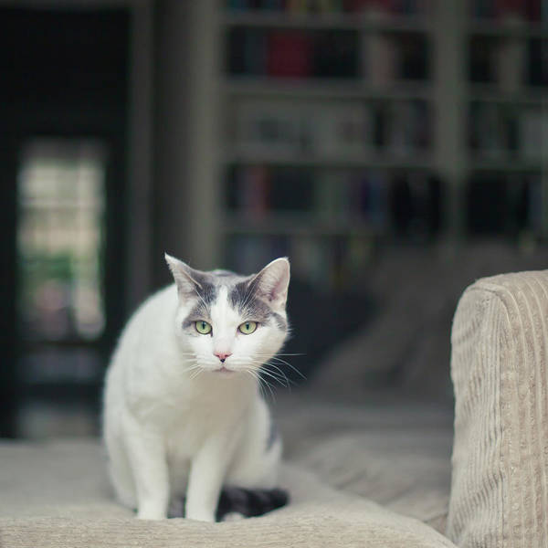 Curiosity Photograph - White And Grey Cat On Couch Looking At Birds by Cindy Prins
