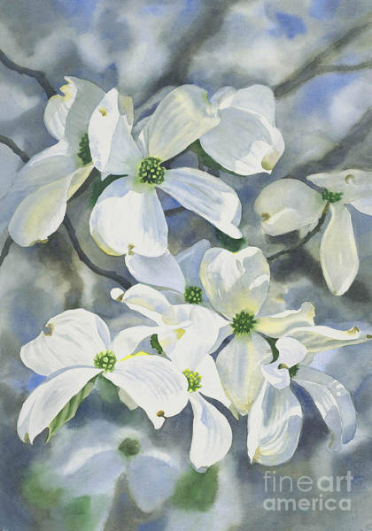 Dogwood Painting - White Dogwood by Sharon Freeman